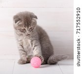 gray striped kitten scottish... | Shutterstock . vector #717552910