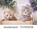 cat  pet  and cute concept  ... | Shutterstock . vector #717553258