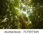 jungle forest. tropical trees... | Shutterstock . vector #717557104