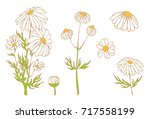 camomile hand drawn vector set | Shutterstock .eps vector #717558199