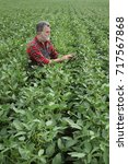Small photo of Farmer or agronomist examining green soybean plant in field using tablet