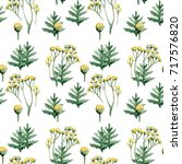 tansy on a white background.... | Shutterstock . vector #717576820