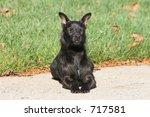 Sunning Patterdale Terrier