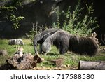 giant anteater in a field. | Shutterstock . vector #717588580