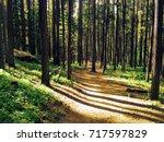Trail Near Boulder  Colorado