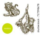set of monkey. vector... | Shutterstock .eps vector #717598678