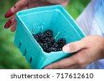 blackberry picking  | Shutterstock . vector #717612610