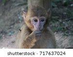 baby monkey portrait | Shutterstock . vector #717637024