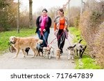 Stock photo dog sitters walking their customers in a park 717647839