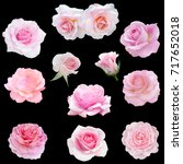 Stock photo collage of delicate pink roses isolated on black background 717652018