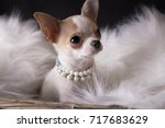 Cute Puppy Chihuahua In A...
