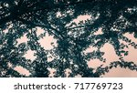 the tree and leaves in the... | Shutterstock . vector #717769723