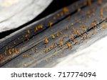 mushroom in rain season on...   Shutterstock . vector #717774094