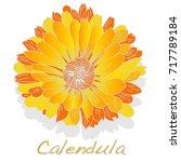 calendula. medical herb... | Shutterstock .eps vector #717789184