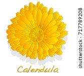 calendula. medical herb... | Shutterstock .eps vector #717789208