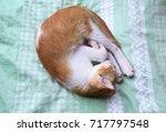 cat sleep like ball in bedtime | Shutterstock . vector #717797548