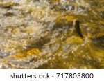 trout fishing in the mountain... | Shutterstock . vector #717803800