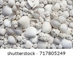Background Of White Seashells...