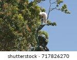 Sydney Australia  Sulphur...