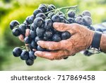 black or blue bunch grapes in... | Shutterstock . vector #717869458