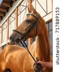 thoroughbred race horse...   Shutterstock . vector #717889153