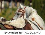 arabian horse. gray stallion...   Shutterstock . vector #717902740
