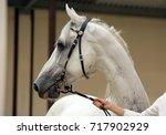 arabian horse. gray stallion...   Shutterstock . vector #717902929