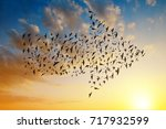 silhouette of birds flying in... | Shutterstock . vector #717932599