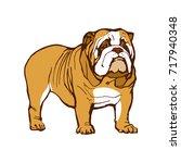 english bulldog animal dog... | Shutterstock .eps vector #717940348