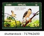 Small photo of MOSCOW, RUSSIA - AUGUST 29, 2017: A stamp printed in Cuba shows Gundlach's Hawk (Accipiter gundlachi), circa 1976