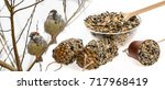 Making Feeders For Birds From...
