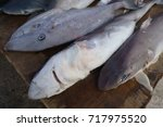 shark without fins on sale... | Shutterstock . vector #717975520