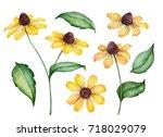 Watercolor Set Of Rudbeckia...