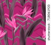 strelitzia reginae blossom or...   Shutterstock .eps vector #718061920