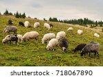 Herd Of Sheep Graze On Green...