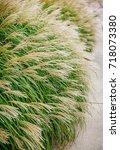 tall grass | Shutterstock . vector #718073380