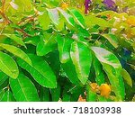 green leaves concept   abstract ...   Shutterstock . vector #718103938
