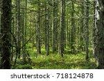 forest. trunks of trees. summer....   Shutterstock . vector #718124878