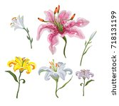 colorful of lilies flower on... | Shutterstock .eps vector #718131199