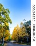 Ginkgo Tree In Front Of Meiji...
