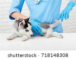 puppy of husky dog with gray... | Shutterstock . vector #718148308