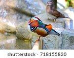 Mandarin Duck Standing Near A...