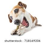 smiling happy pet dog jack... | Shutterstock . vector #718169206