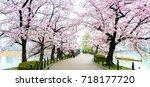sakura tree side walkway in... | Shutterstock . vector #718177720