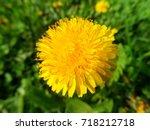 dandelion | Shutterstock . vector #718212718