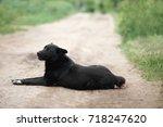 big black mongrel dog with... | Shutterstock . vector #718247620