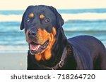 rottweiler on the beach   Shutterstock . vector #718264720