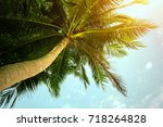vintage toned palm tree over...   Shutterstock . vector #718264828