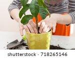 woman's hands transplanting... | Shutterstock . vector #718265146