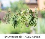 Bundles Of Flavoured Herbs...